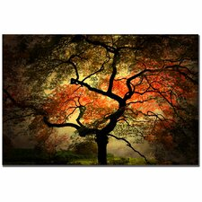 'Japanese' by Philippe Sainte-Laudy Photographic Print on Canvas