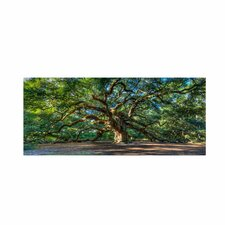 'Angel Oak Charleston' by Pierre Leclerc Wrapped Photographic Print on Canvas