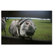 'Give Me A Kiss Donkey' by Patty Tuggle Wrapped Photographic Print on Canvas