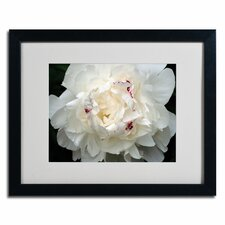 'Perfect Peony' by Kurt Shaffer Photographic Print on Framed Canvas