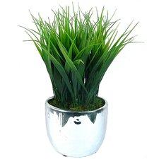 Grass in Round Ceramic Pot