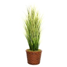 Tall Onion Grass in Round Tapered Fiberstone Planter
