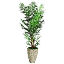 Tall Areca Palm Tree in Planter