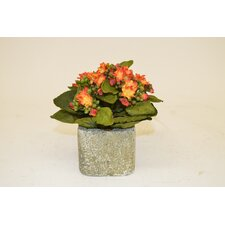 Orange Kalanchoe in Square Ceramic Container