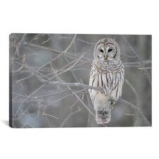 Barred Owl on Branches Photographic Print on Wrapped Canvas