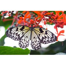 White Butterfly Photographic Print on Canvas