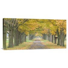 'Country Road Lined by Trees in Autumn' by Owaki-Kulla Painting Print on Canvas