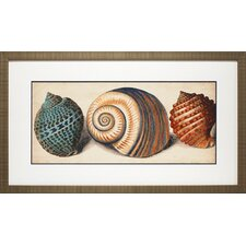 Shell Trio I by Vision Studio Framed Graphic Art