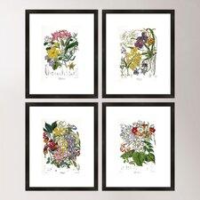 Botanical Framed Print Collection