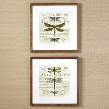 Dragonfly Framed Print Collection