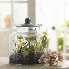 Faux Mixed Mini Orchid Terrarium