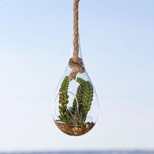 Hanging Terrarium, Faux Protea & Succulent