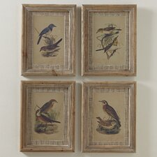 Illustrated Birds Framed Prints (Set of 4)
