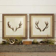 Antler Framed Print Collection