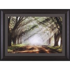 Evergreen Plantation by Mike Jones Framed Photographic Print