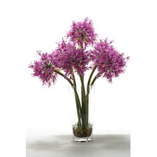 Starfire Alliums in Hexagon Glass Vase