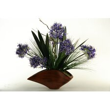 Agapanthus with Foliage in Contemporary Planter