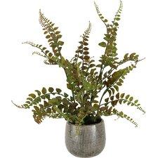 Fern in Ceramic Planter