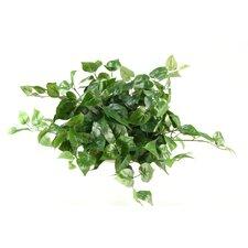 Philo Ivy Desk Top Plant