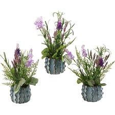 Lavender in Small Ceramic Planter (Set of 3)