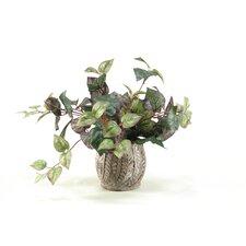 Oxalis Ivy Desktop Plant in Pot