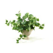 Pothos Desk Top Plant in Urn