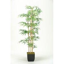 Mini Bamboo Tree in Planter
