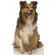 Animals Collie Dog Wall Mural