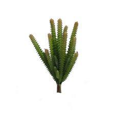 Donkey Tail Cactus Plant