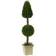 "Boxwood 24"" Double Ball Topiary in Resin Pot (Set of 2)"
