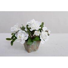 Faux Cape Jasmine Gardenia in Clay Pot