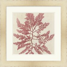 Brilliant Seaweed I by Vision Studio Framed Graphic Art