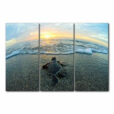 'Turtle' by Christopher Doherty 3 Piece Photographic Printt on Wrapped Canvas Set