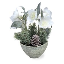 Christmas Rose and Cone Plant in Pot
