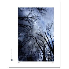 Limited Edition 'Birds and the Blue Sky 02' by Jon Bidwell Photographic Print