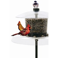 Jagunda Squirrel-Proof Hopper Bird Feeder
