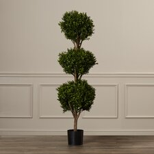 Beauchamp Triple Ball Shaped Boxwood Topiary in Pot