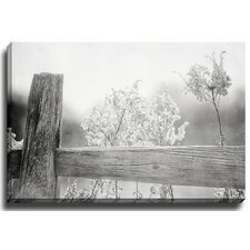 Field Edge BW by Lisa Russo Photographic Print on Canvas