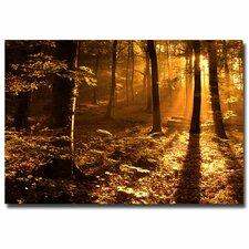 Morning Light Photographic Print on Canvas
