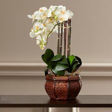 Lorelei Phalaenopsis with Decorative Vase Silk Flower Arrangement