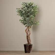 Zeyla Artificial Potted Natural Variegated Ficus Tree in Basket