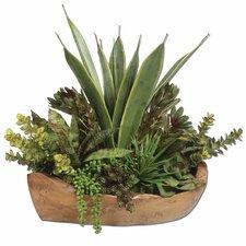 Salar Succulents in Teak Bowl