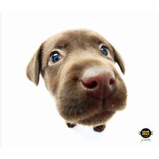 CleanScreen Cloth - Chocolate Lab (Set of 2)