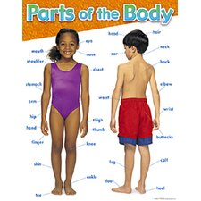 Parts of The Body Chart (Set of 3)