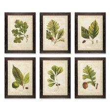 Arborist 6 Piece Framed Painting Print Set