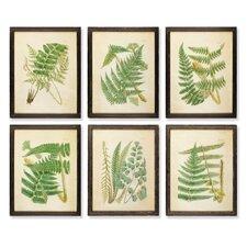 Ferns 6 Piece Framed Painting Print Set