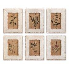 'Botanical' 6 Piece Framed Painting Print Set