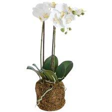 Concretelite Phalaenopsis Faux Floral