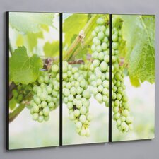 Green Vineyard Grapes 3 Piece Framed Photographic Print Set