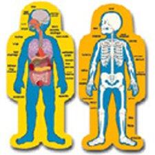 Child-size Human Body Chart Set